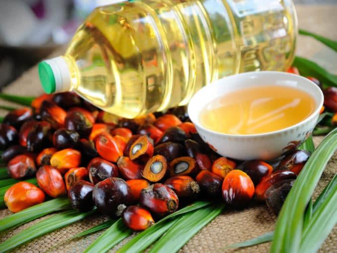 Palmöl und Palmölfrüchte