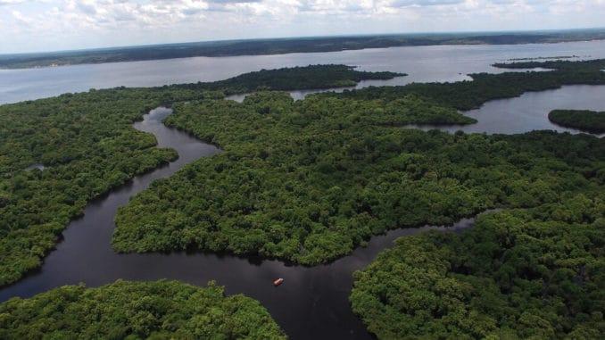 Amazonas Regenwald Brasilien