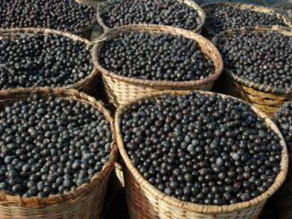 Acai Beeren aus Südamerika