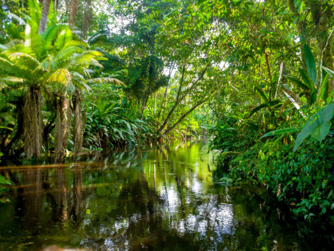 Regenwald im Amazonas-Gebiet