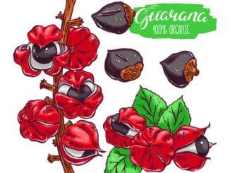 Guarana Grafik mit Frucht