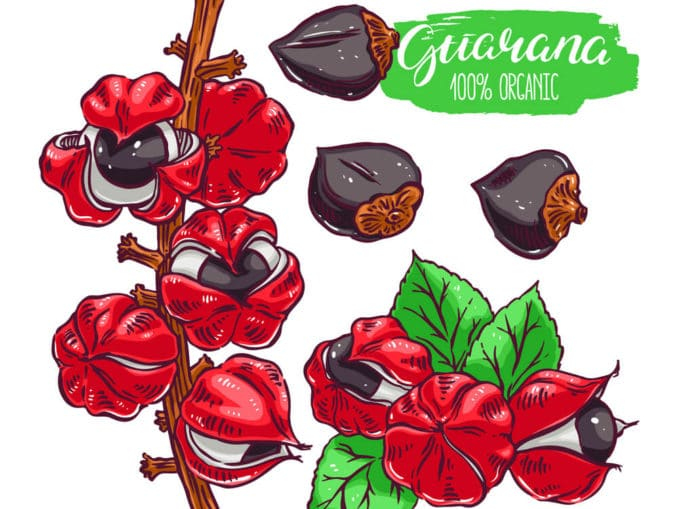 Guarana Grafik mit Frucht