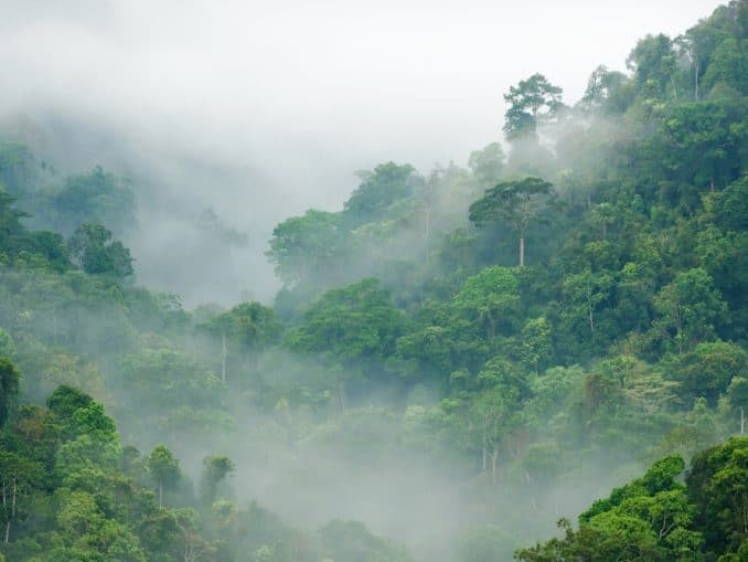 Amazonas Regenwald im Morgennebel