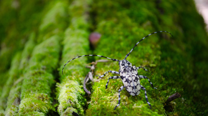 Käfer im Regenwald