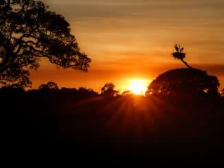 Das Pantanal Brasilien