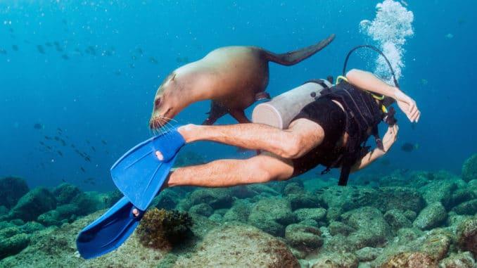 Tauchen an den Galapagos Inseln