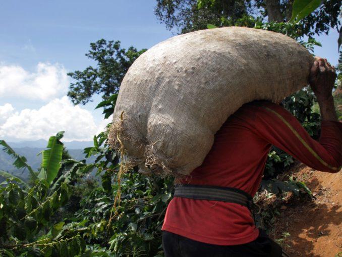 Kaffeearbeiter in Kolumbien